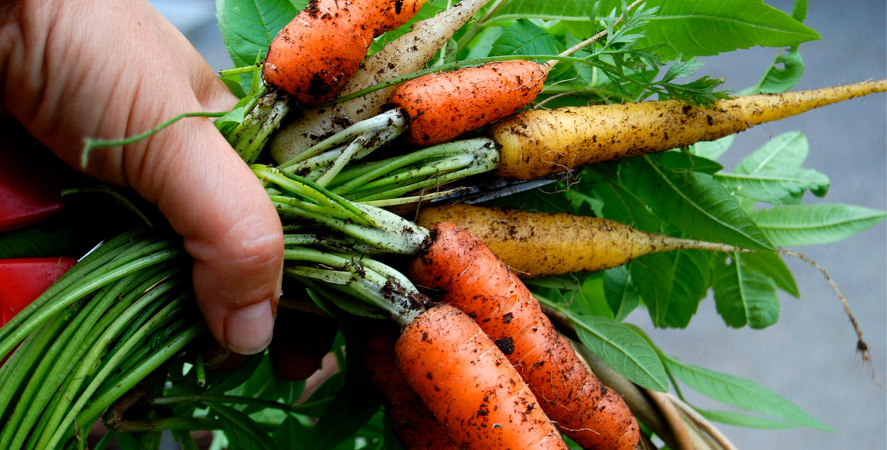 slide_carote_baby_pianta