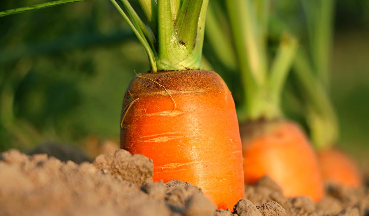 slide_carote_terra